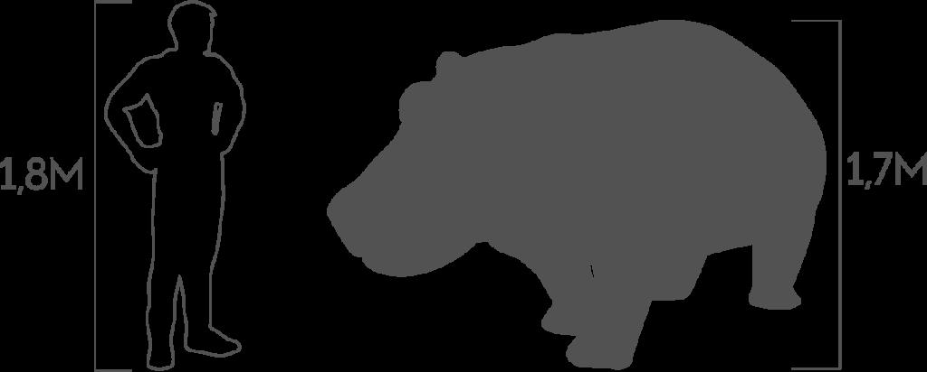 пропорции бегемот