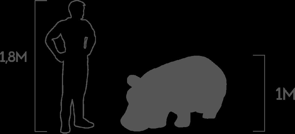 пропорции бегемот малый