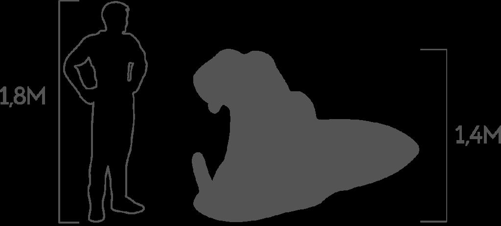 пропорции бегемот 1