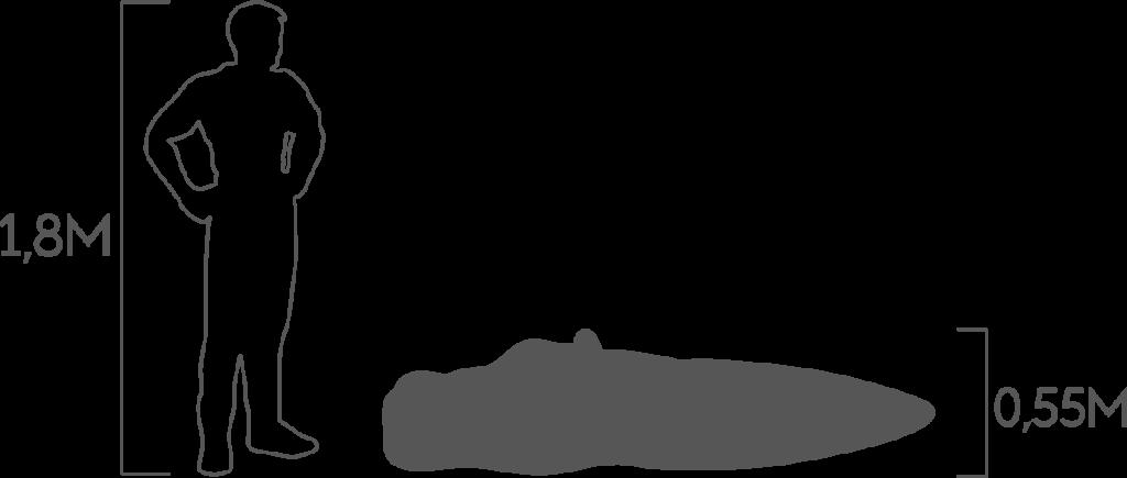 пропорции бегемот 2
