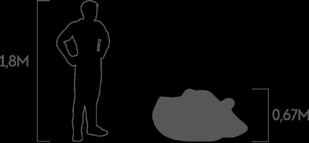 пропорции бегемот 3