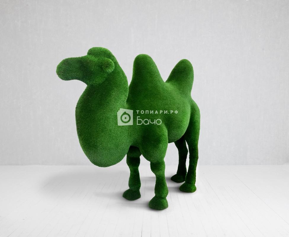 Топиарная фигура Верблюд двугорбый