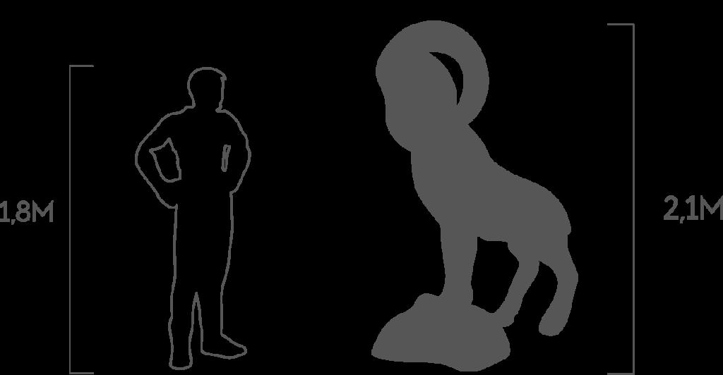 пропорции горный козел