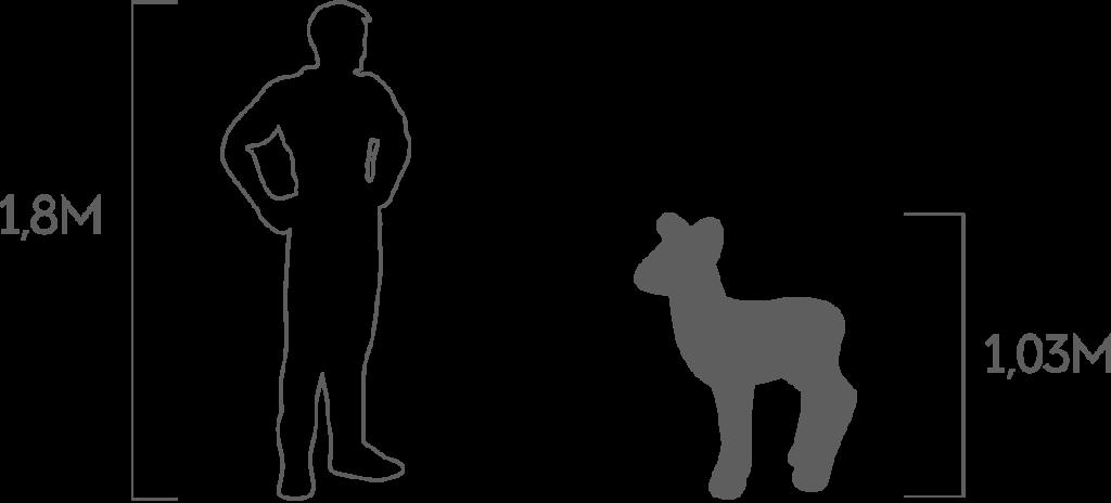 пропорции косуленок