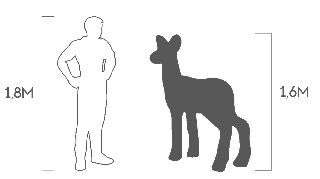 пропорции косуля самка