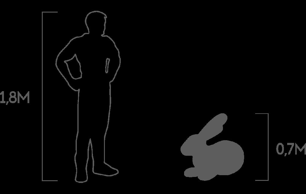 пропорции кролик