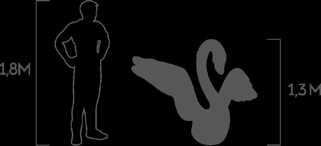 пропорции лебедь 2