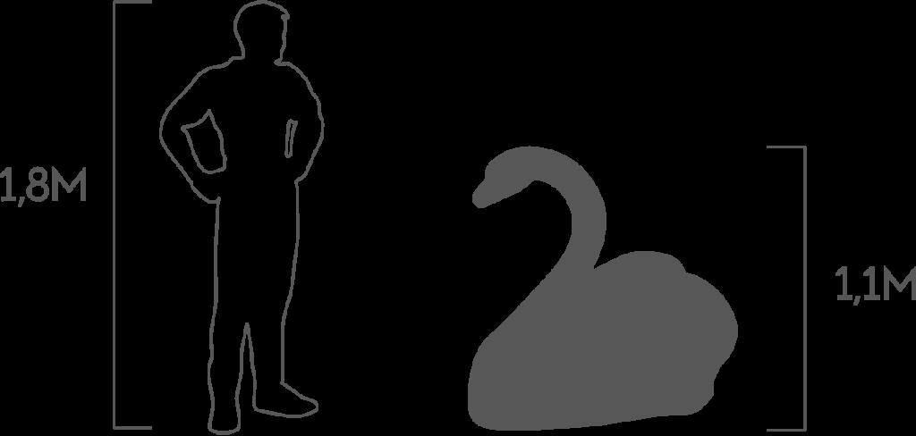 пропорции лебедь 1