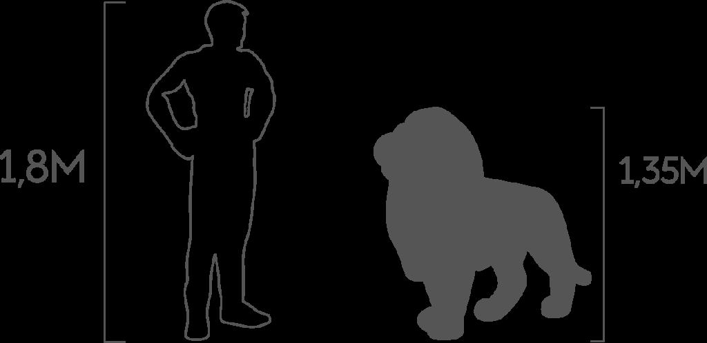 пропорции лев стоячий