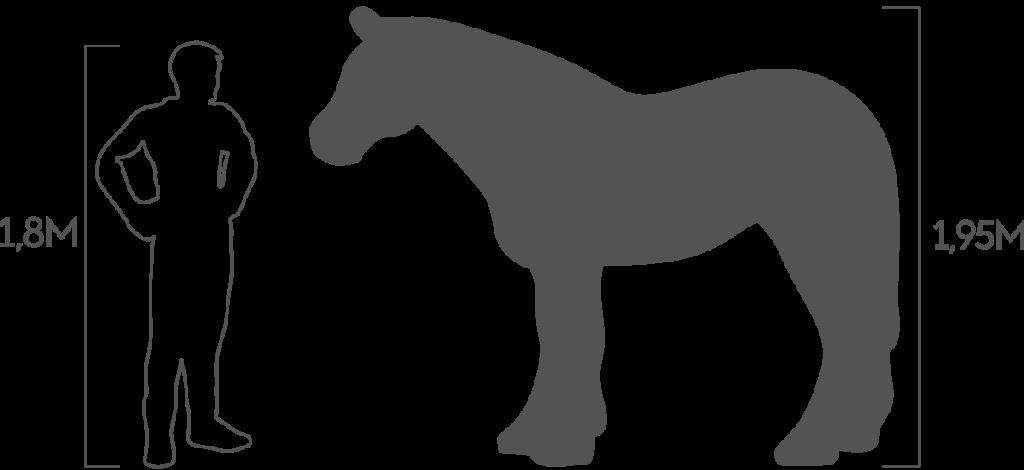 пропорции лошадь