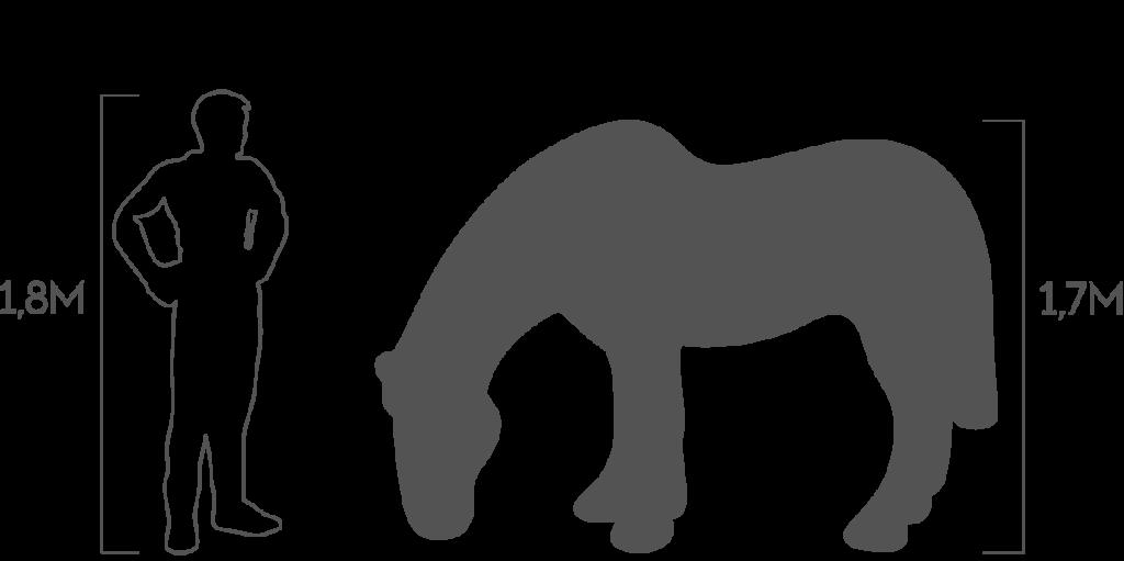 пропорции лошадь на лугу