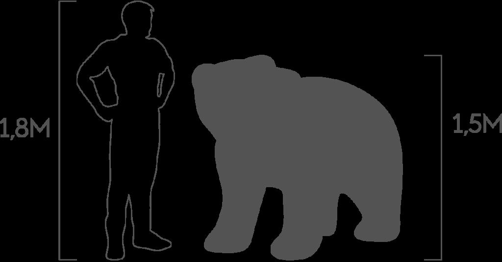 пропорции медведь