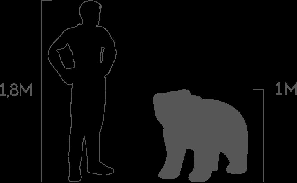пропорции медведь малый
