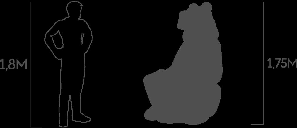 пропорции медведь с корзиной