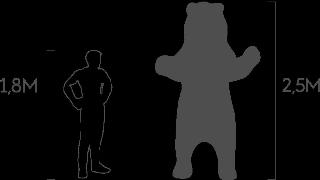 пропорции медведь стоячий