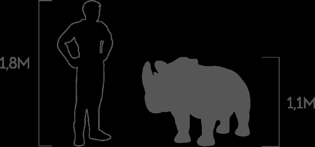 пропорции носорог малый