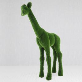 топиарная фигура Жираф малый