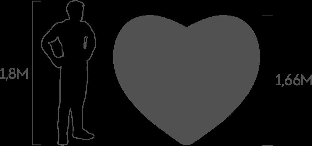 пропорции сердце