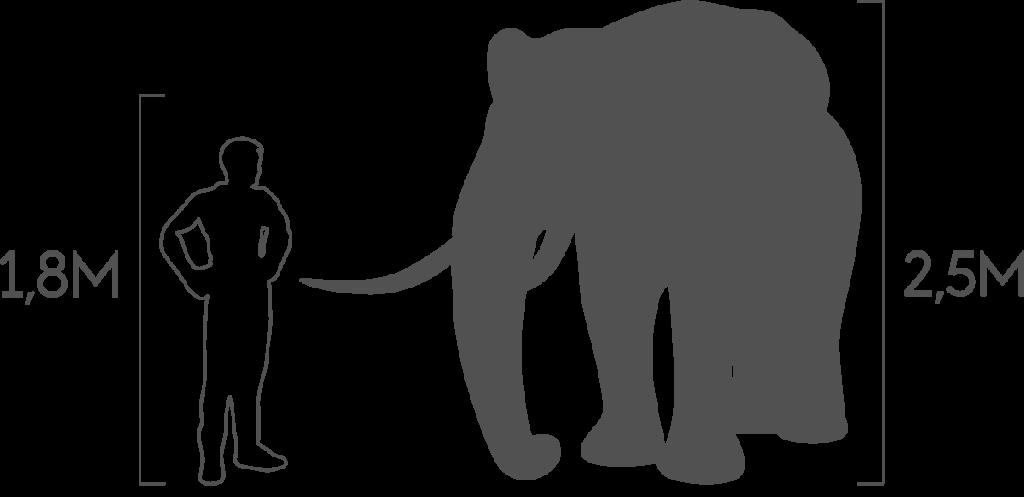 пропорции слон большой
