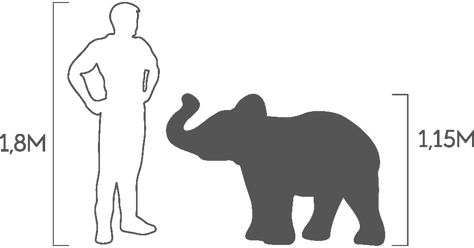 пропорция слон малый