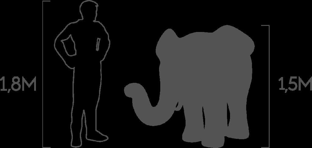 пропорции слон средний