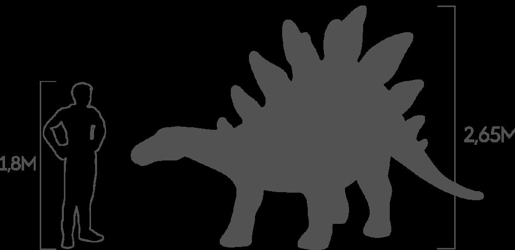 пропорции стегозавр