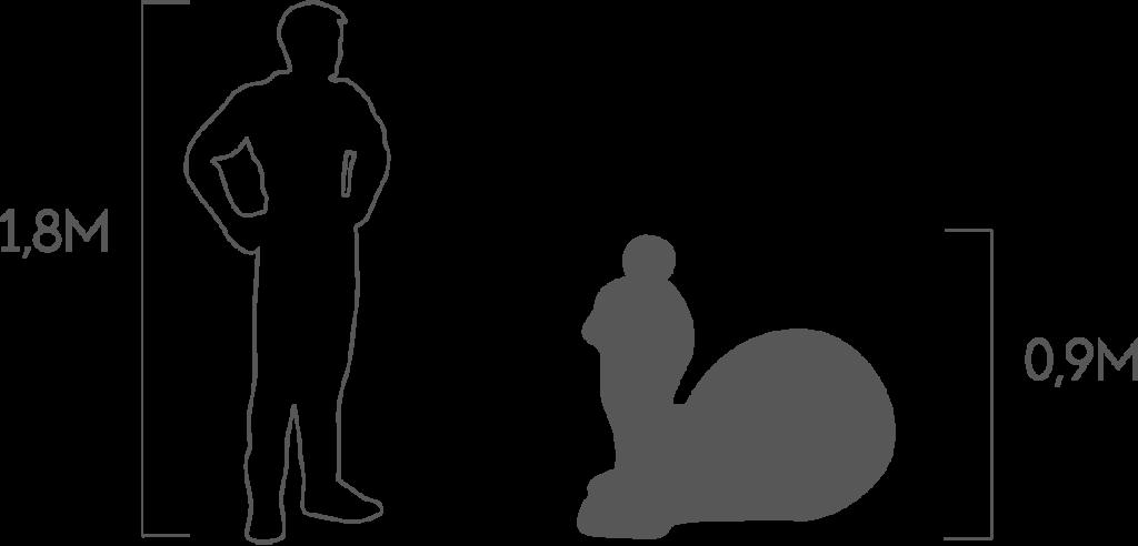 пропорции улитка