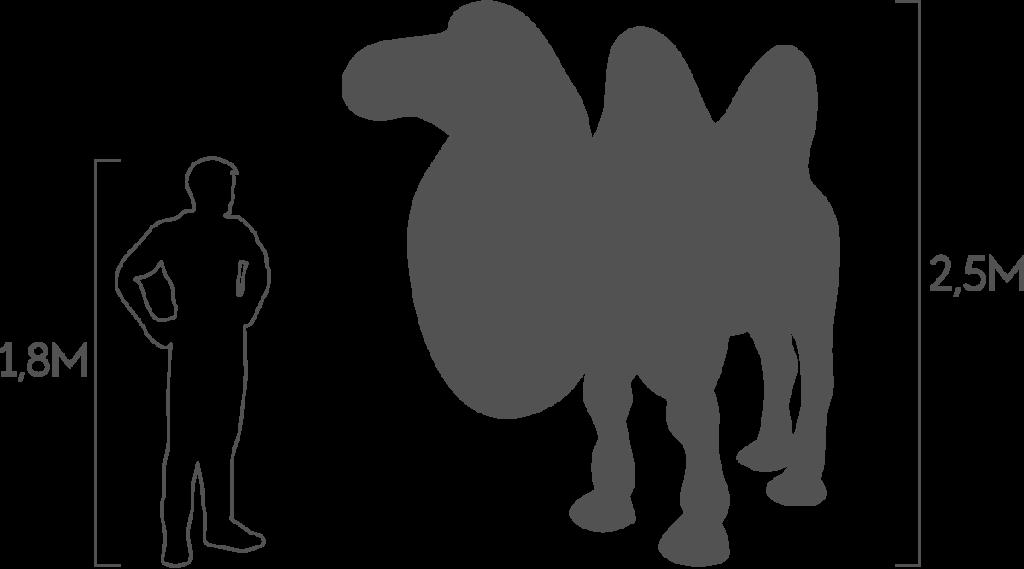 пропорции верблюд двухгорбый