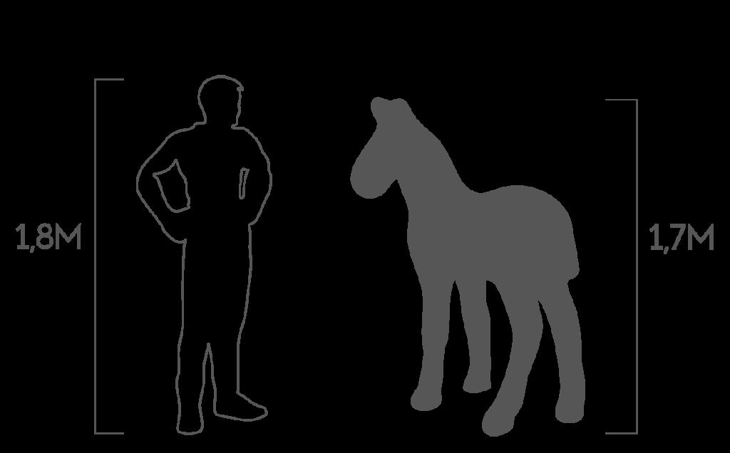 пропорции жеребенок