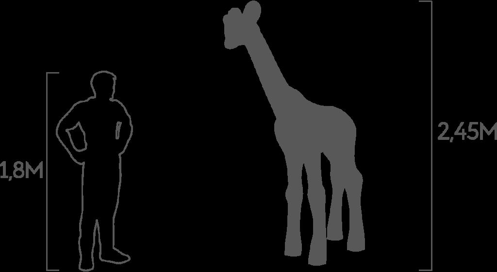 пропорции жираф малый