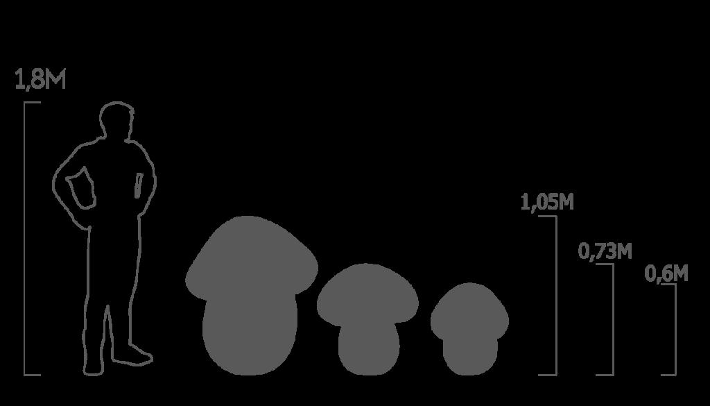 пропорции белые грибы