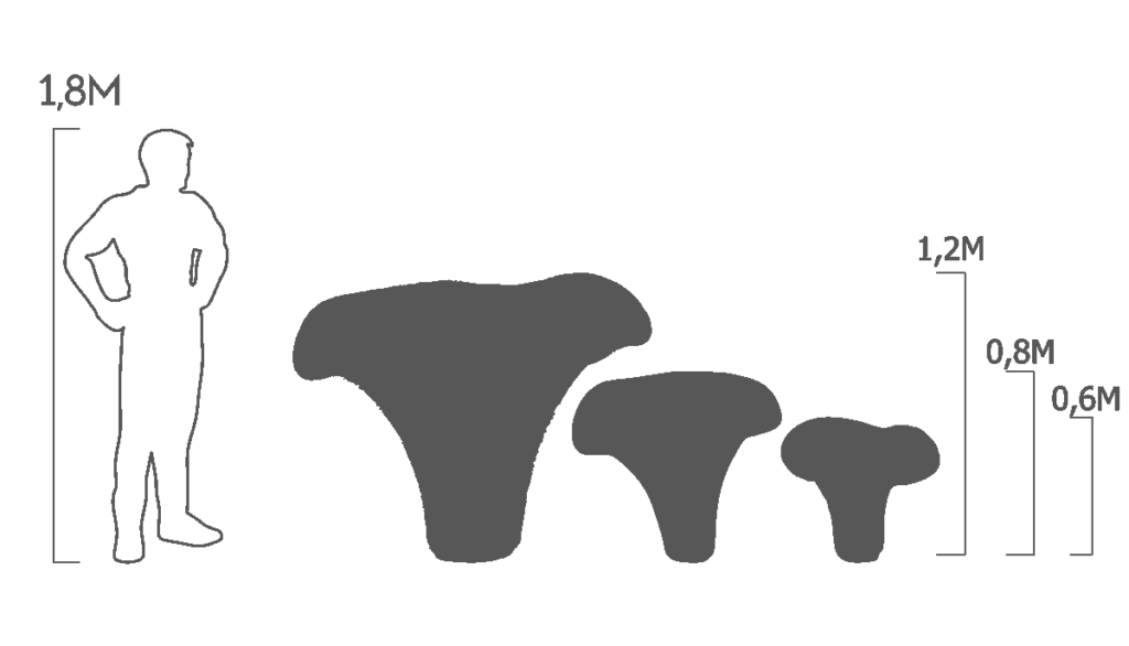 пропорции лисички