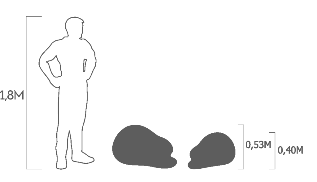 пропорции ежик