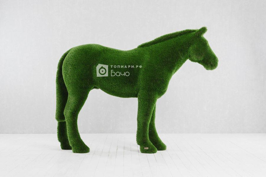 Топиарная фигура Лошадь