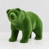 Медведь малый