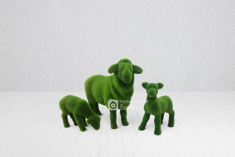 Топиарная композиция овечки